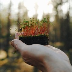 A peace of the home ground. #vscocam #vsco #forest #wood #summer #June #fairytale #liveadventure #liveautentic #livefolk #folk #adventure #livethelittlethings #livegreen #nature #moss #hands #analogue