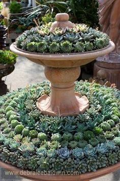 Image result for succulent gardens