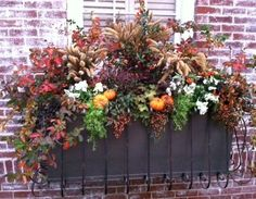 Create a beautiful window box to greet your Thanksgiving guests. Click on the link to learn how: http://southernlivingplants.com/carmen_johnston/article/diy_window_scaping_for_fall