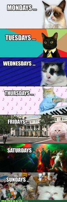 Trendy funny memes humor so true grumpy cat ideas Funny Animal Jokes, Funny Cat Memes, Cute Funny Animals, Funny Animal Pictures, Funny Cute, Hilarious, Memes Humor, Funny Humor, Funny Pics
