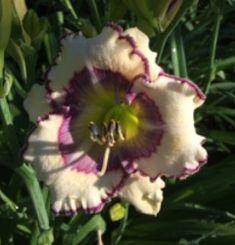 Evergreen, Cosmic, Illusions, Bloom, Seasons, Plants, Seasons Of The Year, Plant, Optical Illusions