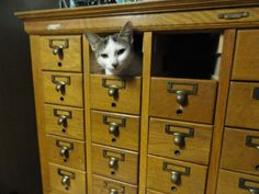 """The Card CATalog"" -- Gotta love cats and their boxes!"