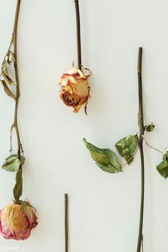 down upside hanging flowers roses dried rawpixel premium aesthetic
