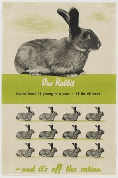 Raising Meat Rabbits for the Homestead --Posted 4/7/2015 By Sean Mitzel