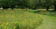 A meadow design by Tom Stuart-Smith