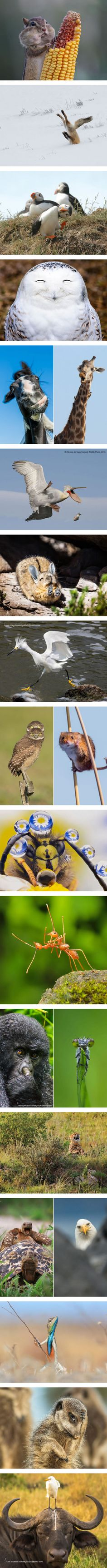 2016 Comedy Wildlife Photography Awards (By Comedy Wildlife Photography)