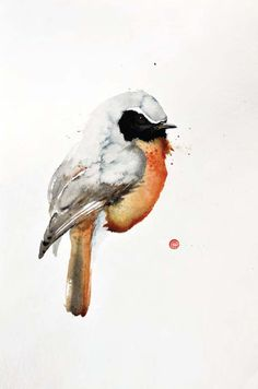 Redstart - Karl Martens - watercolor