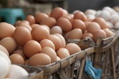 How hens are cared for can influence their eggs' nutritional content and environmental impact.