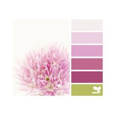 design seeds | search | for all who ♥ color ❤ liked on Polyvore featuring design seeds, colors, pictures, color palettes and backgrounds