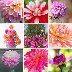 Begonia, Dahlia, Amanda, Plants, Lawn, Plant, Dahlias, Planets