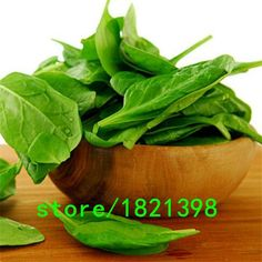 spinach seed big 100 pcs Vegetable seeds