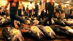 Tsukiji Fish Market - Live Tuna Auction at 5 am!  first-come, first-serve basis, and limited to 120 people, admitted in two shifts of 60. You can register starting at 4:30 a.m. at the fish information center inside the Kachidoki Gate off Harumi Street