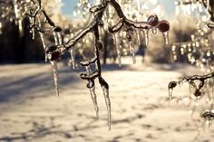The Ice Storm, Trees, and Home Insurance Claims