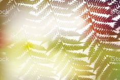 New Zealand Native Ponga or Punga Tree Fern Frond royalty-free stock photo Fern Frond, Tree Fern, Abstract Photos, Soft Colors, Image Now, Ferns, New Zealand, Nativity, Filter