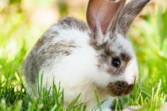 """The government of New Zealand is the latest to move toward banning animal testing for """"finished cosmetic products and their ingredients"""" — which has not historically happened in the country — and now, likely never will. Cosmetic Animal Testing, Wild Rabbit, Pet Rabbit, Packing A Cooler, Healthy Pets, Animal Rights, Mammals, Chihuahua, New Zealand"""