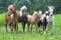 Marian's Animal Pictures: Miniature horse family picture