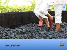 #queretaro FRACCIONAMIENTOS EN QUERÉTARO. Los Viñedos Azteca, están ubicados en una antigua hacienda que data de los inicios del siglo XVIII, una de las primeras construcciones del municipio de Ezequiel Montes. Tienen una superficie de 14 hectáreas y se producen diferentes tipos de vinos que vale la pena disfrutar. En ASIN BR, le invitamos a conocer los inmuebles que tenemos disponibles, para adquirir su patrimonio. asinmex@asinbr.mx