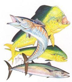 Ocean fish bull dolphin dorado mahi