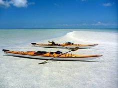 Florida Bay Outfitters - Paddle & Kayak eco-tours rentals, lessons, guides and more. Official 2015 Upper Keys Reef Crawl Operators in Key Largo. Florida Bay, Vip Card, Kayak Paddle, Kayak Tours, Snorkeling, Kayaking, Diving, Places Ive Been, Boat