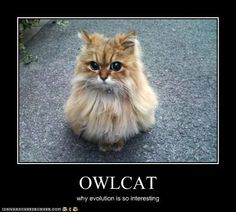 Funny-pictures-cat-looks-like-an-owl