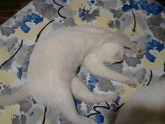 gongo dorme