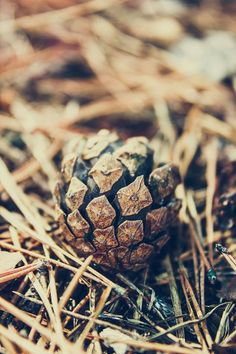 Pine cone by Lita Akhmetova on 500px