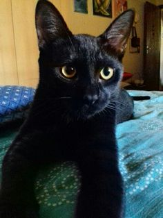 Gato preto. Rio de Janeiro.