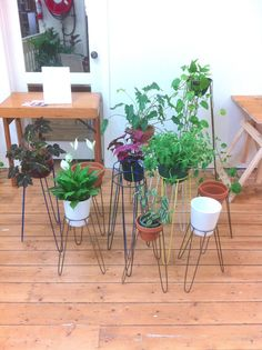 Steel plant stand - colour