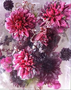 """Japanese artist Kenji Shibata has frozen flowers and the result is poignant: photographs that are both beautiful and halting. His """"Locked in the. Fine Art Photography, Photography Flowers, Ethereal, Flower Power, Pink Purple, Photo Art, Floral Wreath, Frozen, Gallery"""