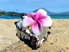 Shell with Plumeria...