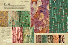 Bark: An Intimate Look at the World's Trees by Cedric Pollet, French photographer.