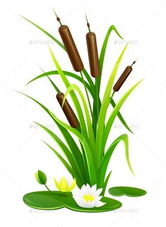 Buy Reed Bush Thicket Plant With Green Leaves by LoopAll on GraphicRiver. Reed bush thicket plant with green leaves and water lily flowers vector illustration. Frog Drawing, Plant Drawing, Watercolor Cards, Watercolor Paintings, Inkscape Tutorials, Plant Vector, Art Drawings For Kids, Textile Fiber Art, Mosaic Garden