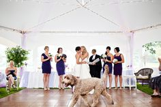 Love the dog photobombing the kiss! From Kandise Brown photography