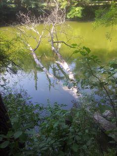 Trunk in River Sky, River, Nature, Outdoor, Heaven, Outdoors, Naturaleza, Heavens, Outdoor Games