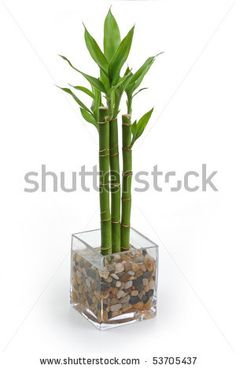 Idea Of Making Plant Pots At Home // Flower Pots From Cement Marbles // Home Decoration Ideas – Top Soop Bamboo House Plant, Bamboo In Pots, Bamboo Tree, Bamboo Plants, Potted Plants, Indoor Plants, House Plants, Indoor Herbs, Air Plants