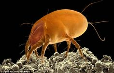 The Basic Facts of Mite Removal - https://samtemplemanblog.wordpress.com/2016/10/27/the-basic-facts-of-mite-removal/