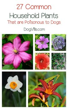 27 Poisonous Plants for Dogs – The Common Dangers
