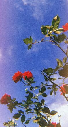 Ideas Flowers Photography Wallpaper Inspiration Beautiful For 2019 Wallpaper Pastel, Flower Phone Wallpaper, Sunflower Wallpaper, Aesthetic Pastel Wallpaper, Iphone Background Wallpaper, Aesthetic Backgrounds, Aesthetic Wallpapers, Fall Wallpaper, Wallpaper Ideas