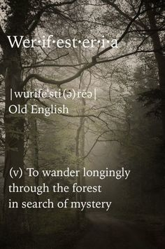 Looking for the words in the woods. Unusual Words, Unique Words, Cool Words, Amazing Words, Amazing Quotes, The Words, Books And Tea, Word Nerd, Aesthetic Words