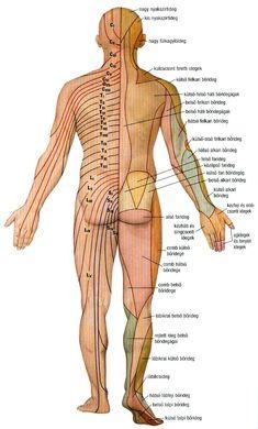 Térkép: Csigolya Térkép Arm, Health, Human Body, Arms, Health Care, Salud