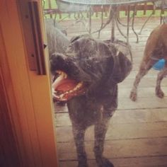 photos-de-chiens-les-plus-embarassantes-de-2013-15
