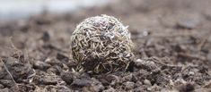 Finished wildflower seed ball