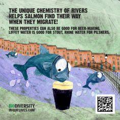 Biodiversity Beermats bring wildlife to Dublin pubs - Ireland's Wildlife Dublin Pubs, How To Make Beer, Salmon, Irish, Wildlife, Quotes, Quotations, Irish Language, Atlantic Salmon