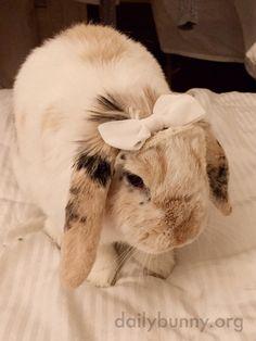 Pretty bunny wears a pretty bow in her fur - January 12, 2015