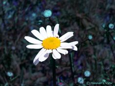 """""""Planet Blue"""" by Hannah Underhill, Memphis, TN // A beautiful daisy // Imagekind.com -- Buy stunning fine art prints, framed prints and canvas prints directly from independent working artists and photographers."""