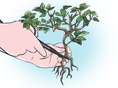 How to Trim a Bonsai -- via wikiHow.com