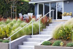 Waves of grasses, phormiums and feature contained by a concrete retaining wall.