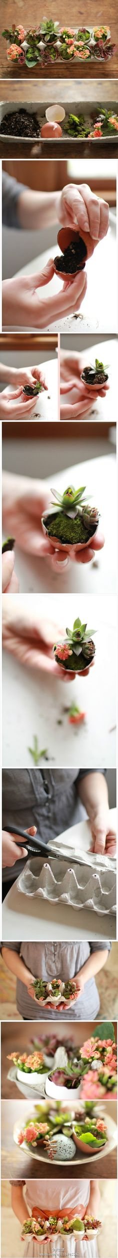Way too cute :: Eggshell garden
