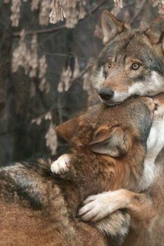 Ahhh everyone needs a hug