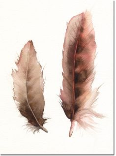 watercolor feathers subliminal  www.facebook.com/loveswish
